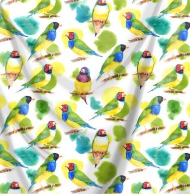 Амадины - птицы, Популярные