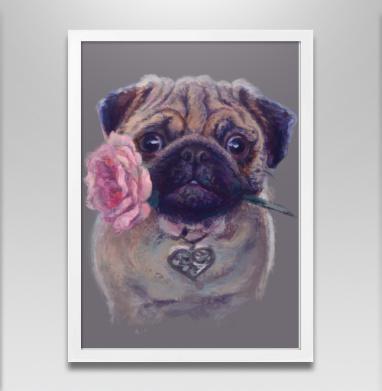 Мопсик с розой - Постер в белой раме, собаки